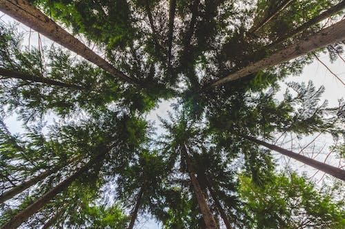 #trees, #树, #树木, #森林 的 免费素材照片