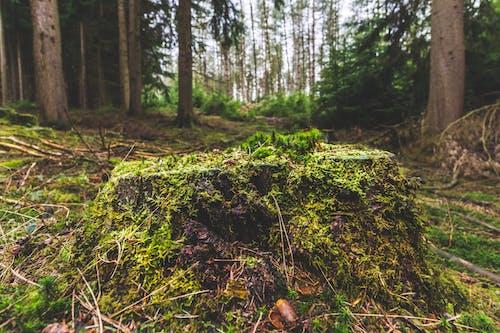 #stump, #trees, #树, #树木 的 免费素材照片