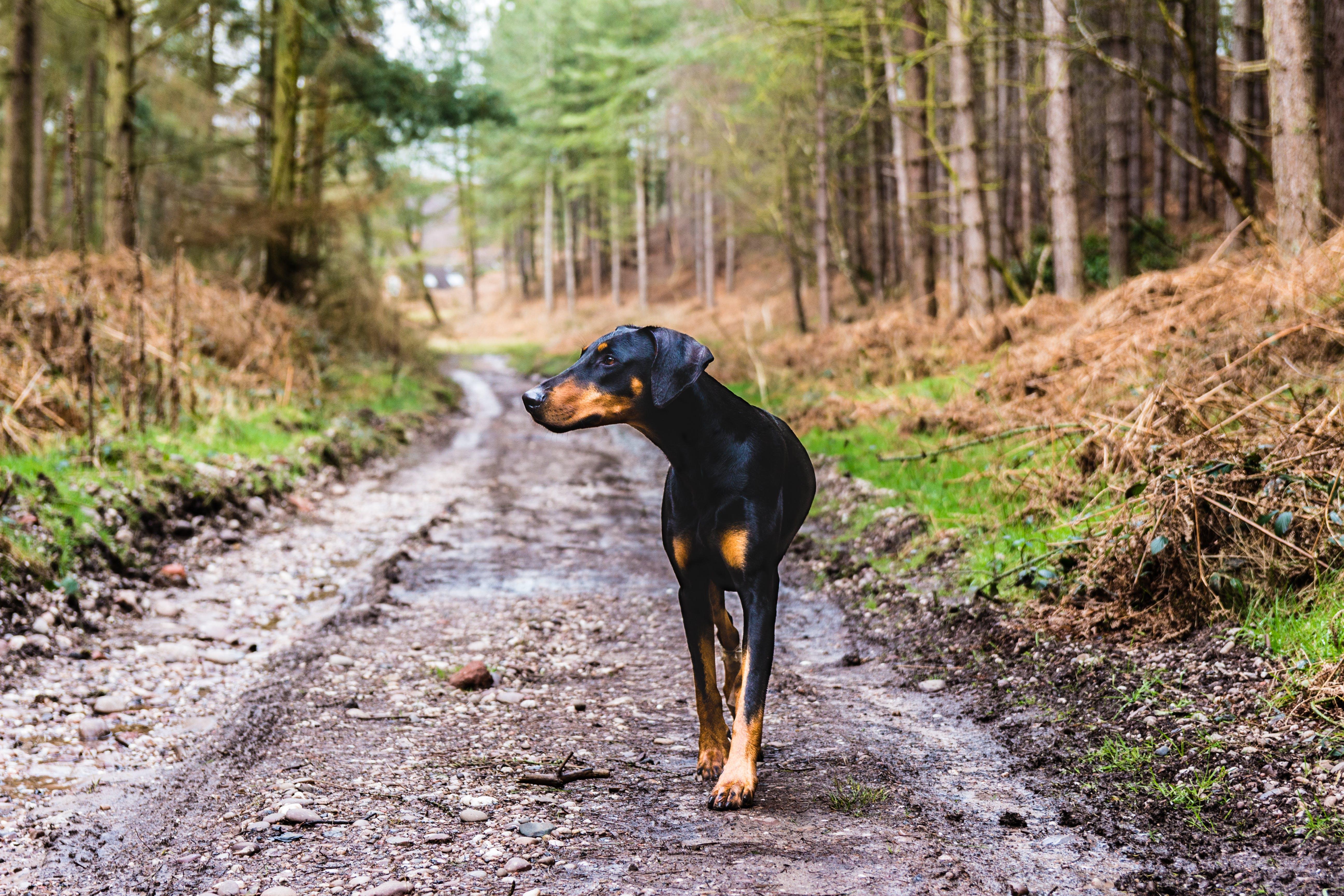 #dog, #dogwalk, #forest