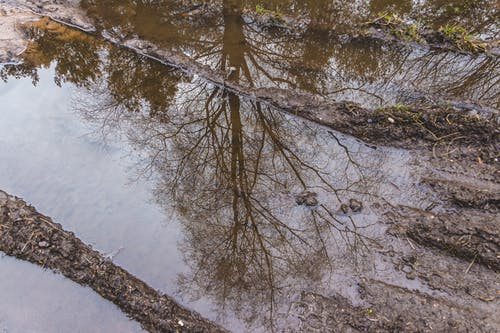 #puddle, #反射, #树 的 免费素材照片