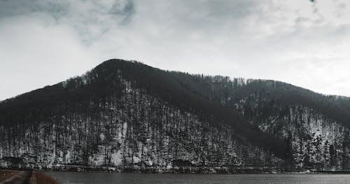Foto d'estoc gratuïta de aigua, arbre, boira, neu