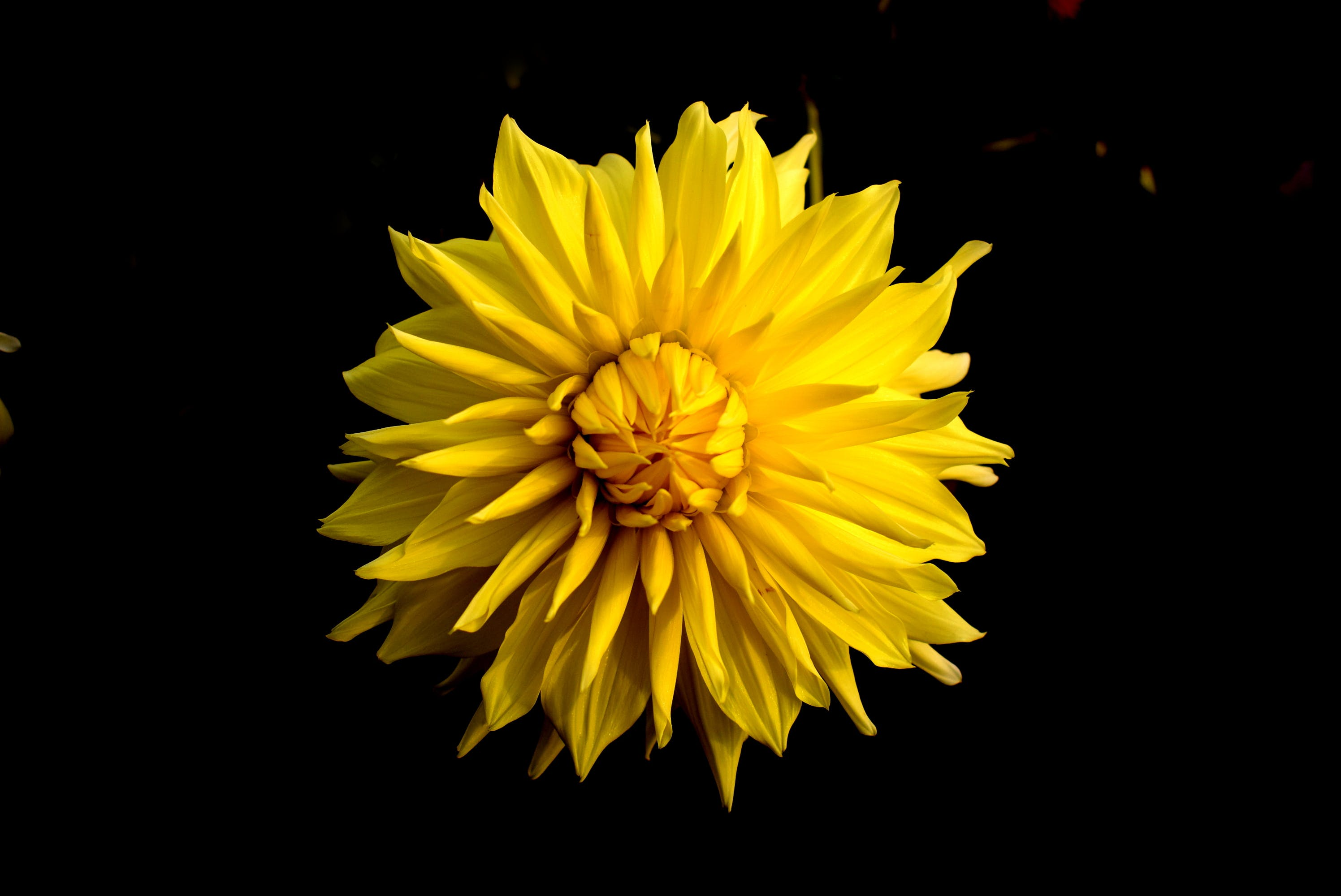 Close Up Photo of Yellow Clustered Flower