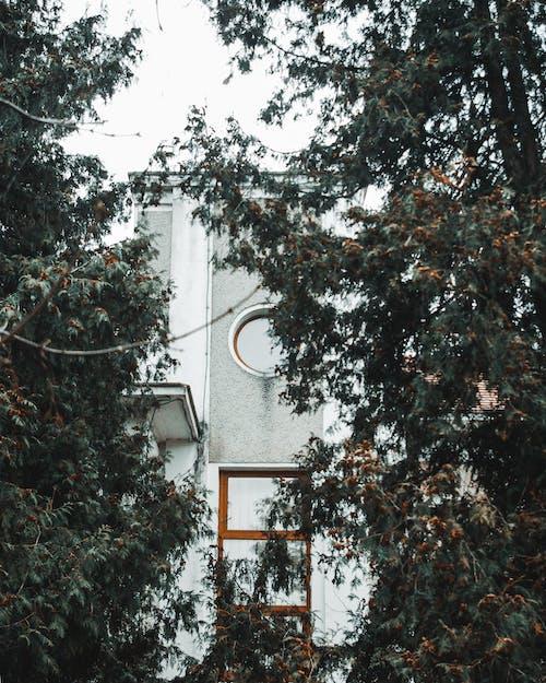 Foto d'estoc gratuïta de arbres, arquitectura, colors, llum del dia