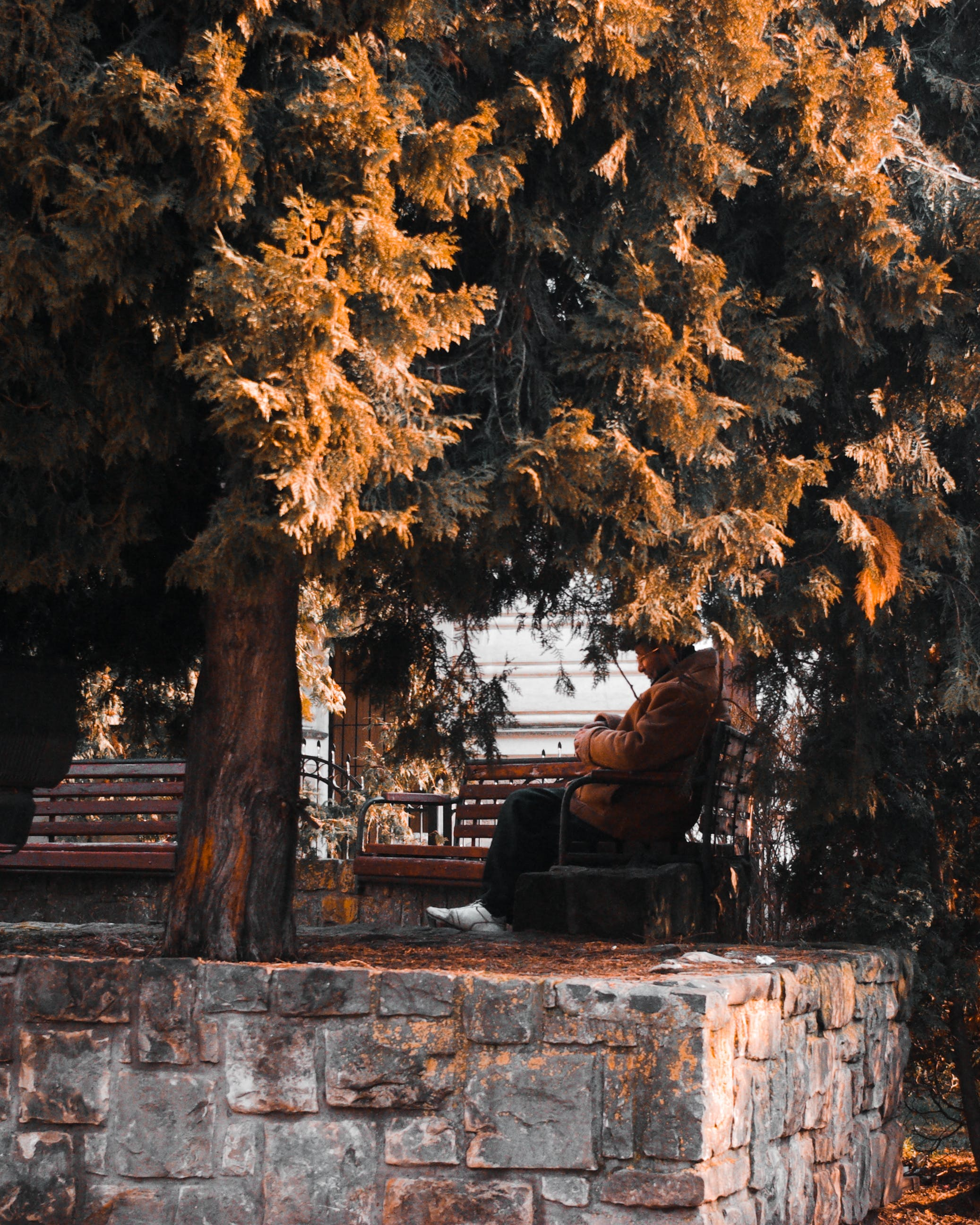 Person in Beige Jacket Sitting on Outdoor Bench Near Tree