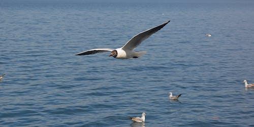 Gratis stockfoto met aan zee, avontuur, blauw, gratis