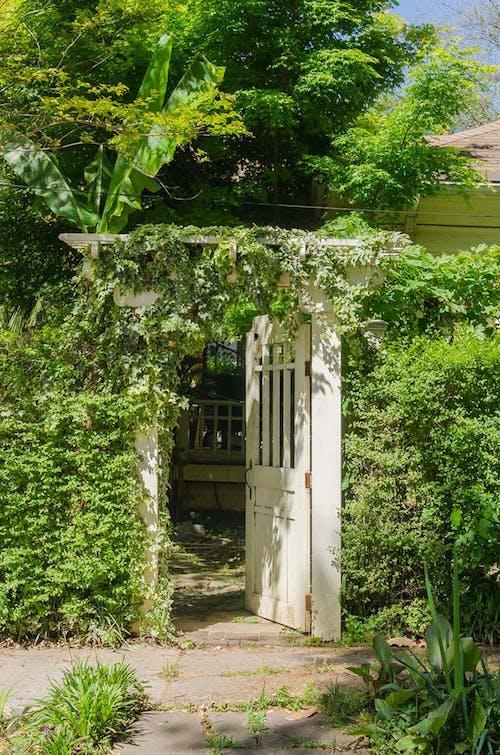 あずまや, ドアを開ける, ぶどうの木, 外のドアの無料の写真素材