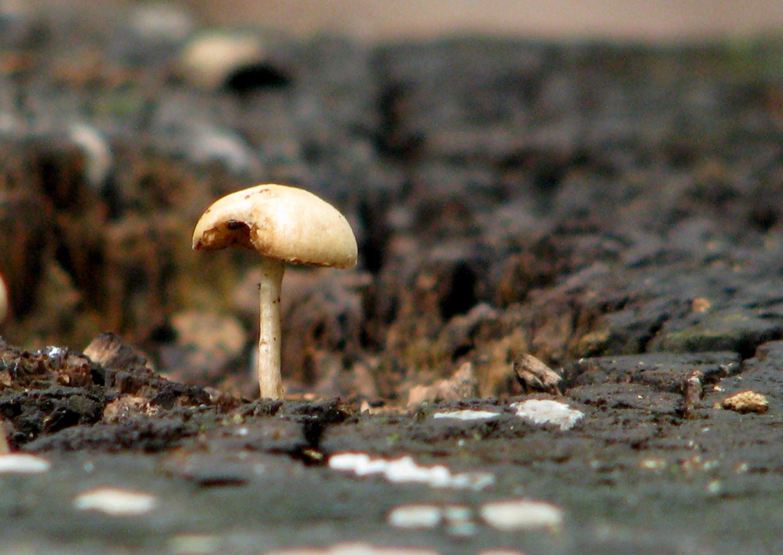 Free stock photo of botanic, mushroom