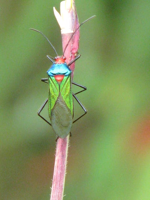 Free stock photo of bug, insect