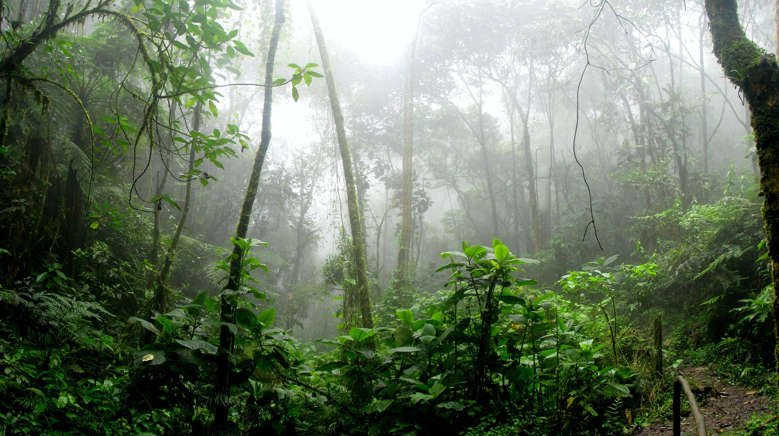 The Power of Forests to Fight Climate Change
