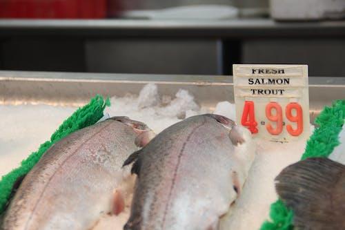 Free stock photo of fish, fish market, market, salmon