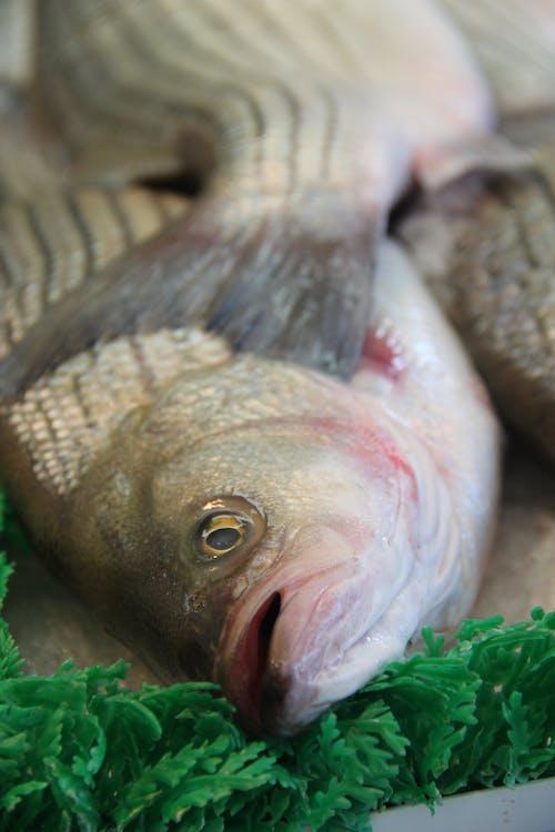 Free stock photo of bass, fish, fish market, market