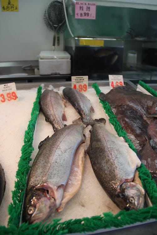 Free stock photo of fish, fish market, market, san francisco