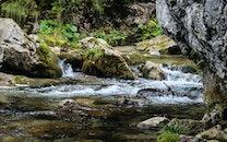 nature, brook, creek