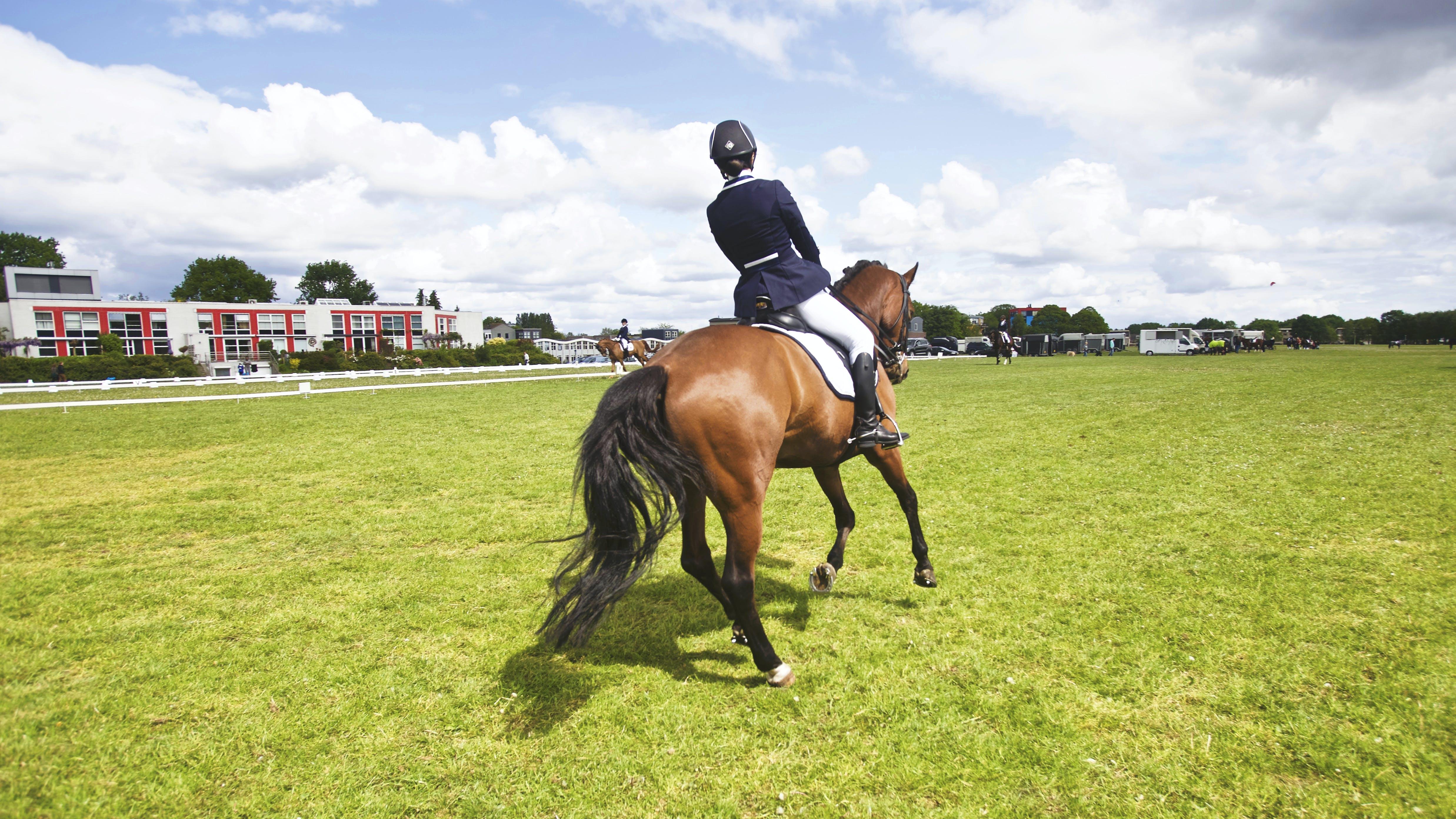 기병, 기수, 대회, 말의 무료 스톡 사진