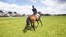 sunny, person, horse