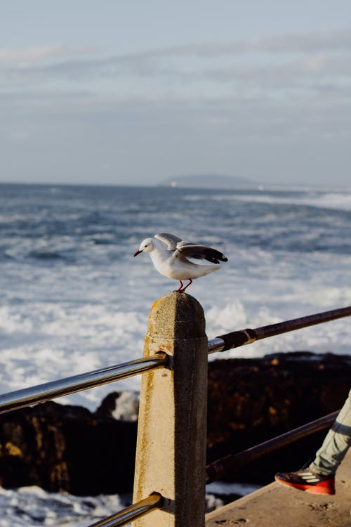 White and Black Bird on Brown Wooden Fence Near Sea