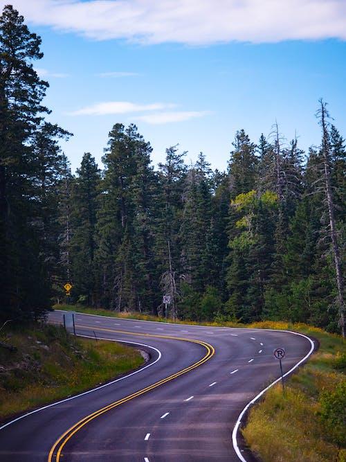 Green Pine Trees Beside Gray Road Under Blue Sky