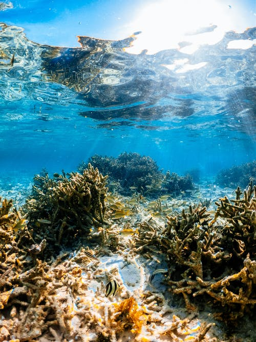 Sea life with coral reef and fish