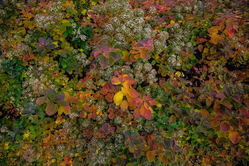 Fotos de stock gratuitas de al aire libre, árbol, arbusto
