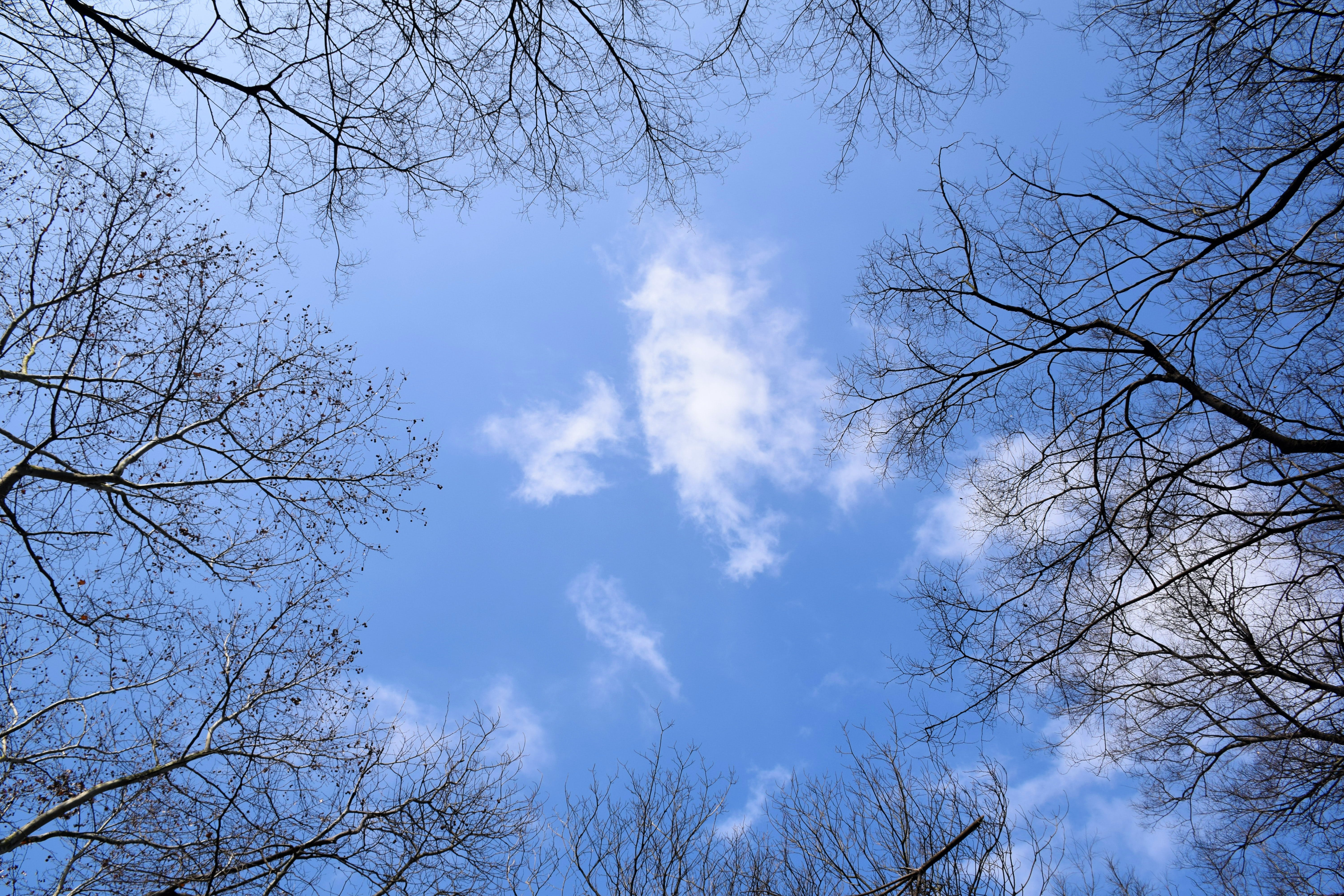 Free stock photo of blue, blue sky, branches, cloud