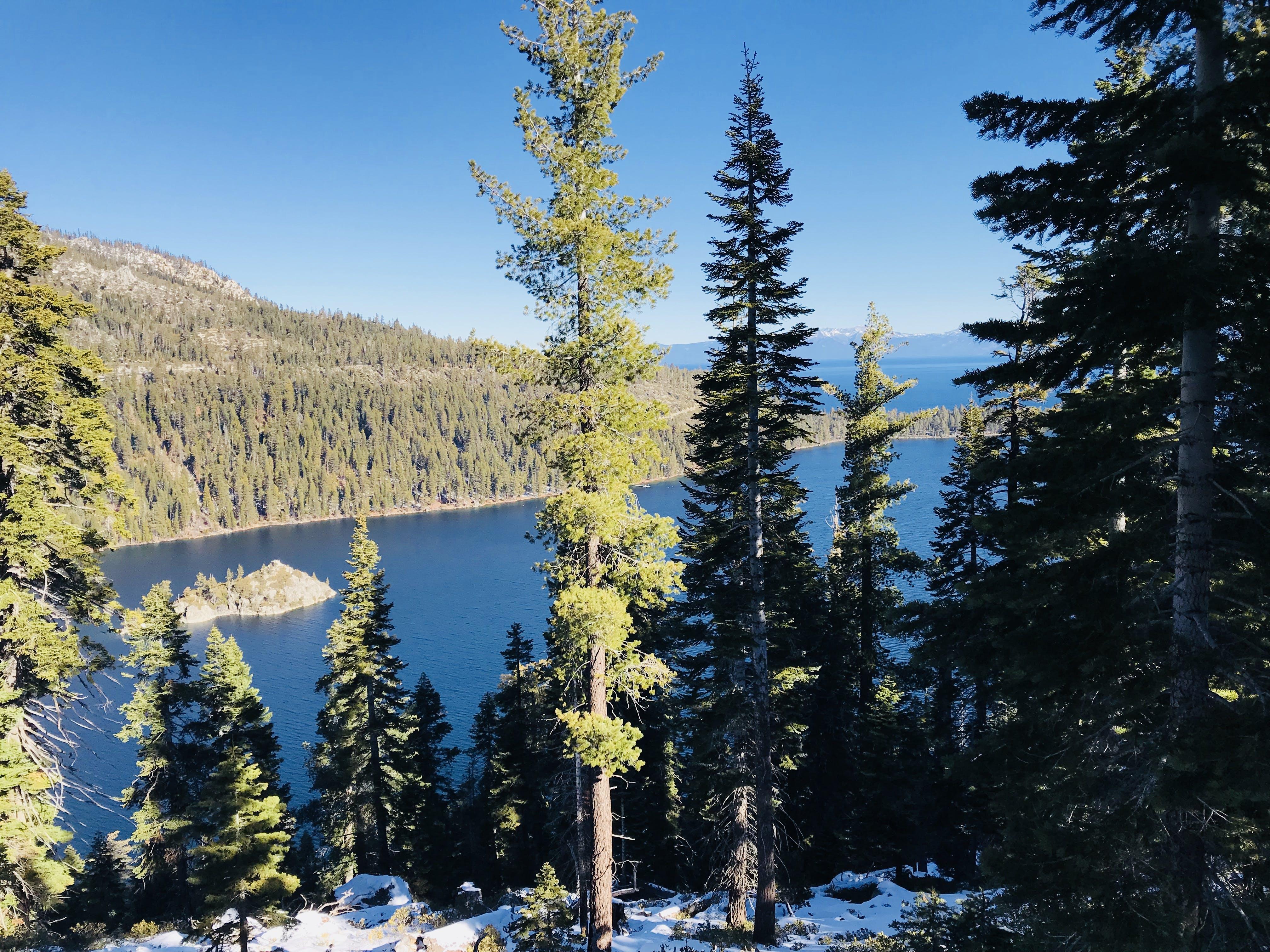 Green Pine Trees and Lake