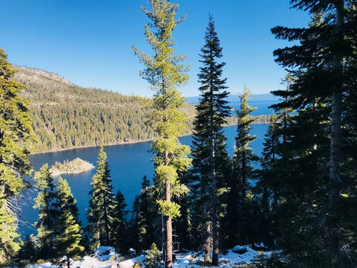Green Pine Trees and Lake