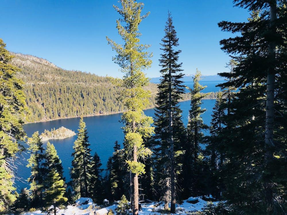 View of Lake Tahoe and surrounding trees- Trip To Lake Tahoe Travel Guide