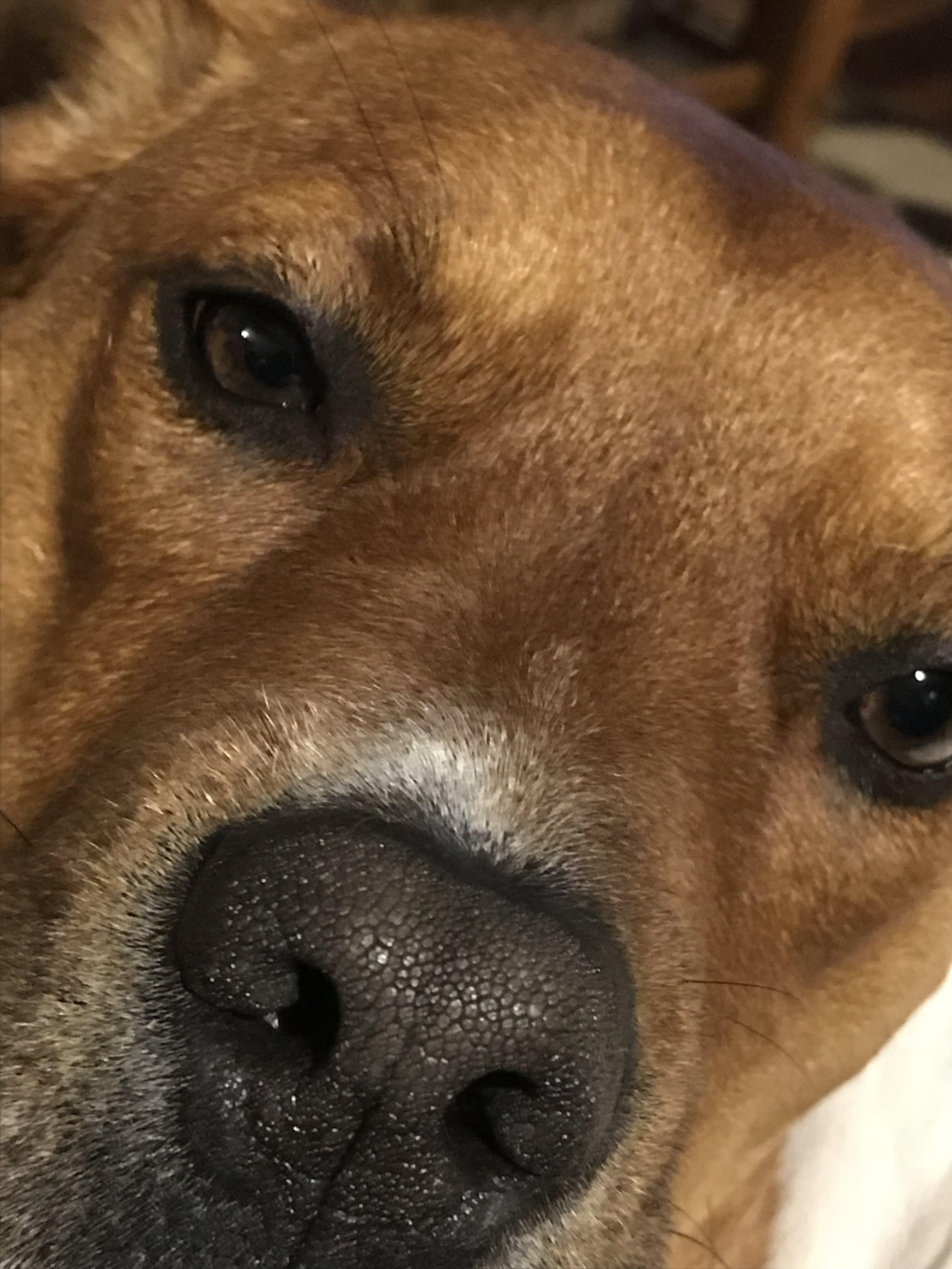 Free stock photo of animal, dog, pets