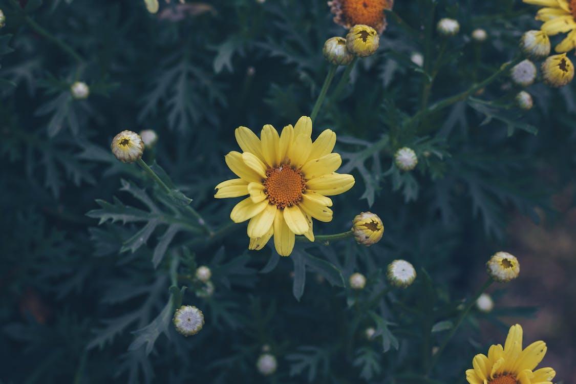 flora, głębia pola, kolor