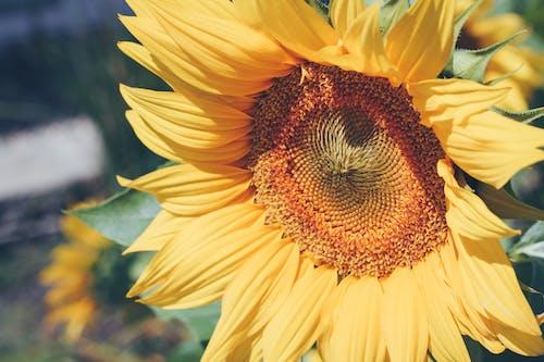 Darmowe zdjęcie z galerii z flora, jaskrawy, jasny