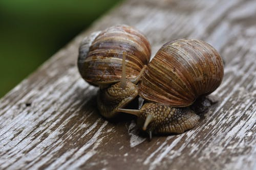 Free stock photo of garden snail, snail, snail shell