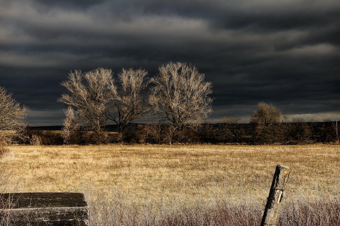 bäume, dämmerung, dunkle wolken