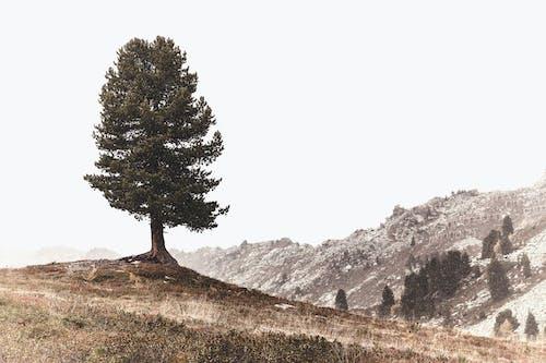 Бесплатное стоковое фото с гора, деревья, живописный, зима