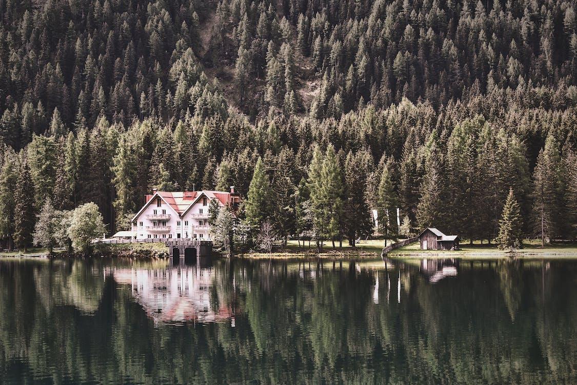 açık hava, ağaçlar, dağ