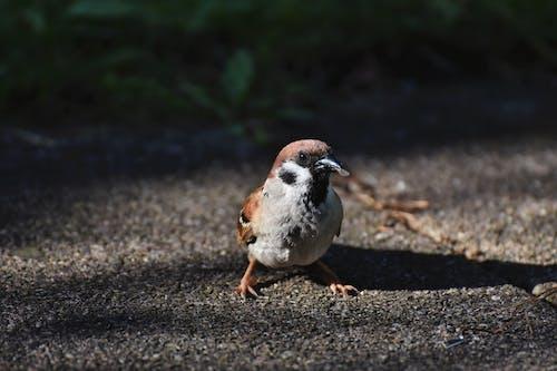 Close-Up Shot of a Sparrow on a Concrete  Floor