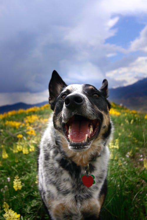 개, 미소, 야생화의 무료 스톡 사진
