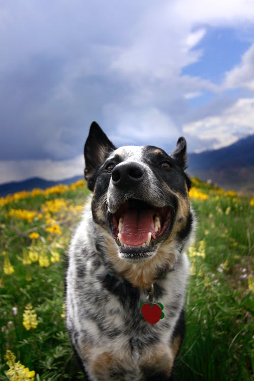 Free stock photo of dog, dogs, nature, smile