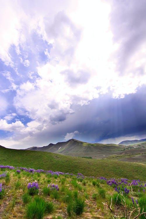 경치, 보라색 꽃, 비구름의 무료 스톡 사진