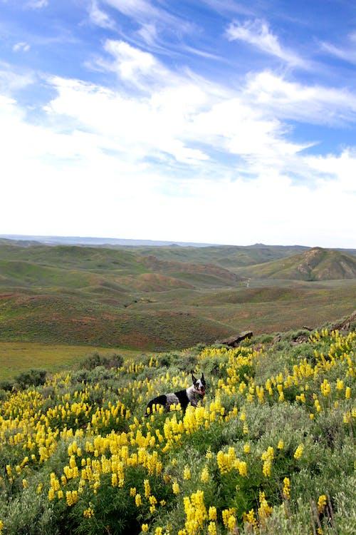 Free stock photo of dog, dogs, wildflowers, yellow flowers