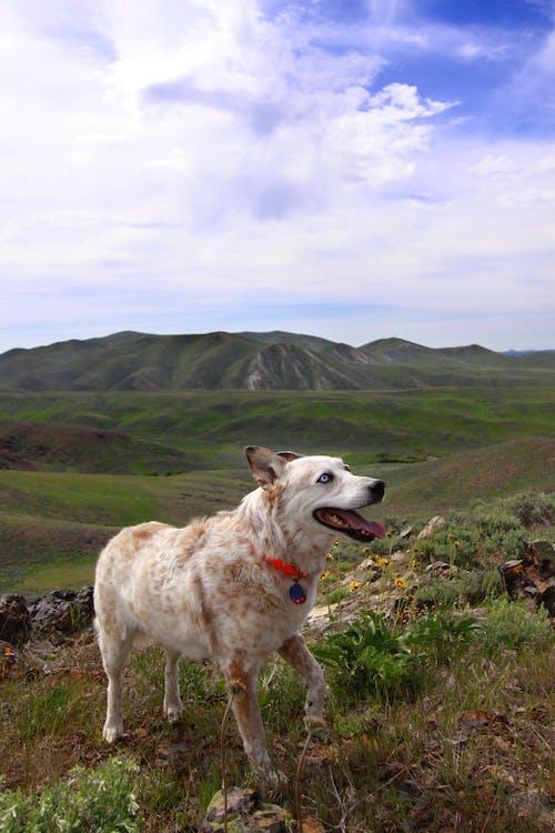 Free stock photo of dog, dogs