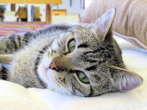嚴肅的貓, 存放吉祥物, 山茱萸動物收容所, 睡貓 的 免費圖庫相片