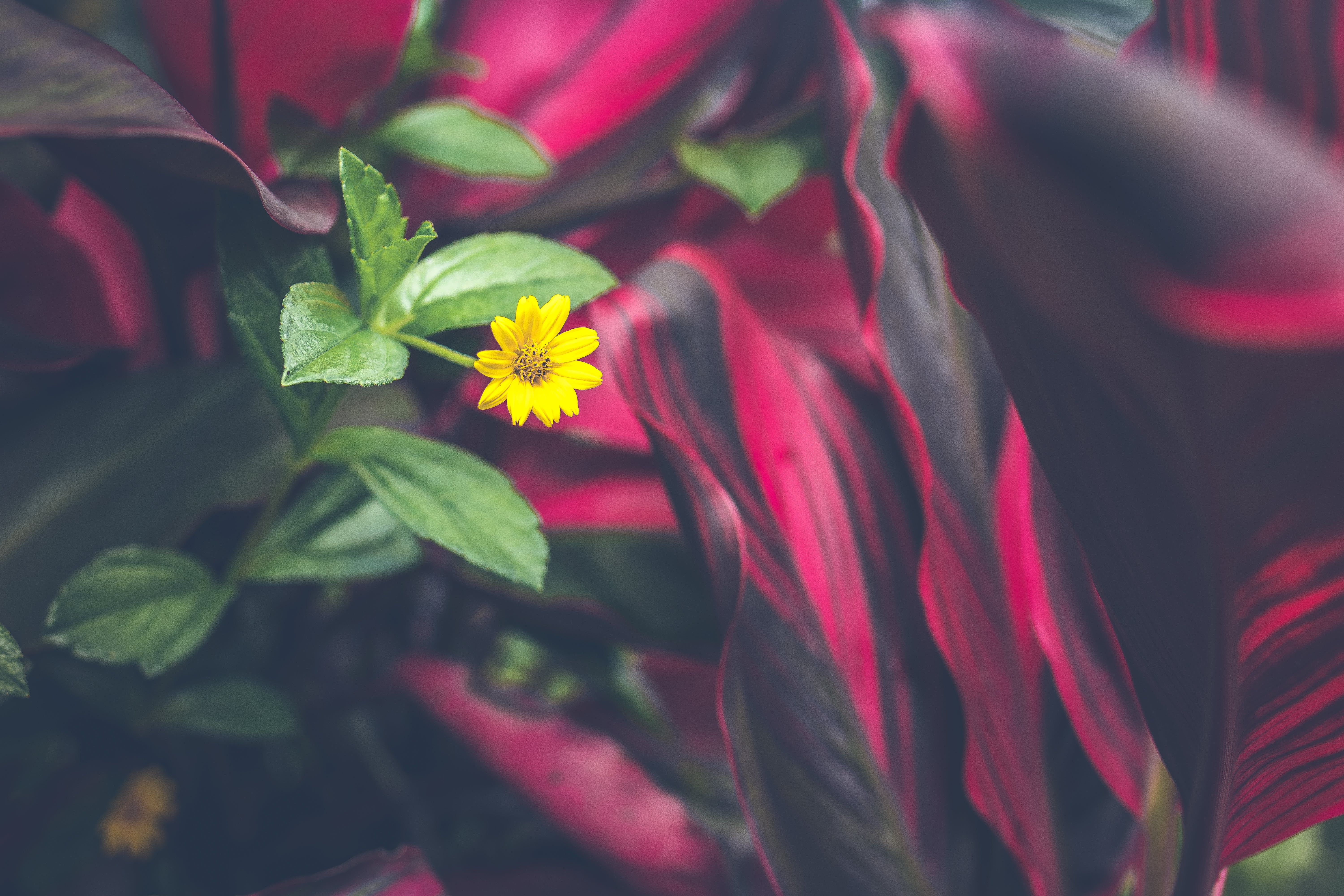 Tilt Shift Photo Of Yellow Flower