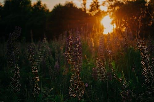 Photos gratuites de arbres, centrales, clairière, coucher de soleil