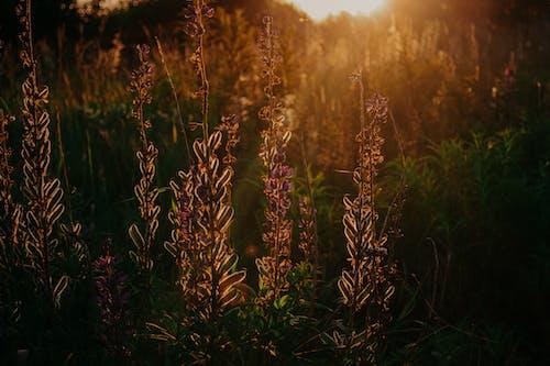 Foto stok gratis bagus, bidang, bunga-bunga, flora