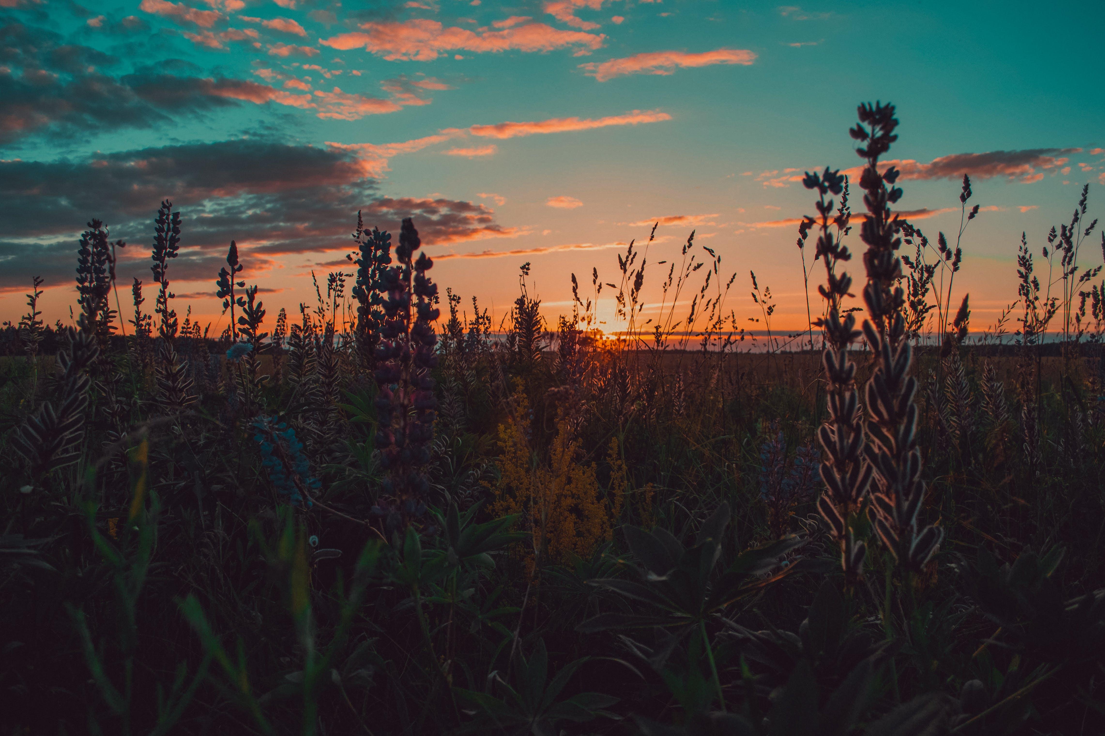 aften, bane, blomster