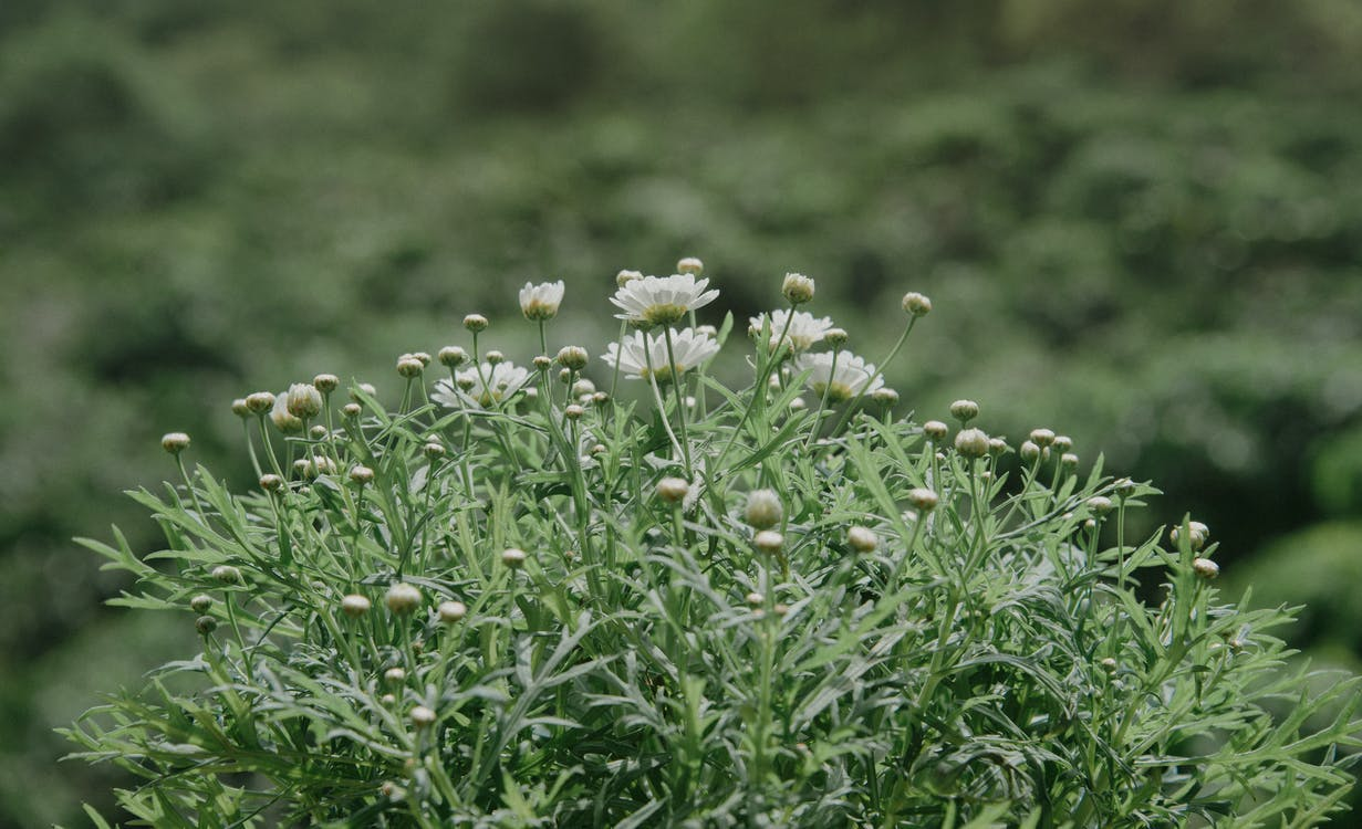 flora, głębia pola, kwiat