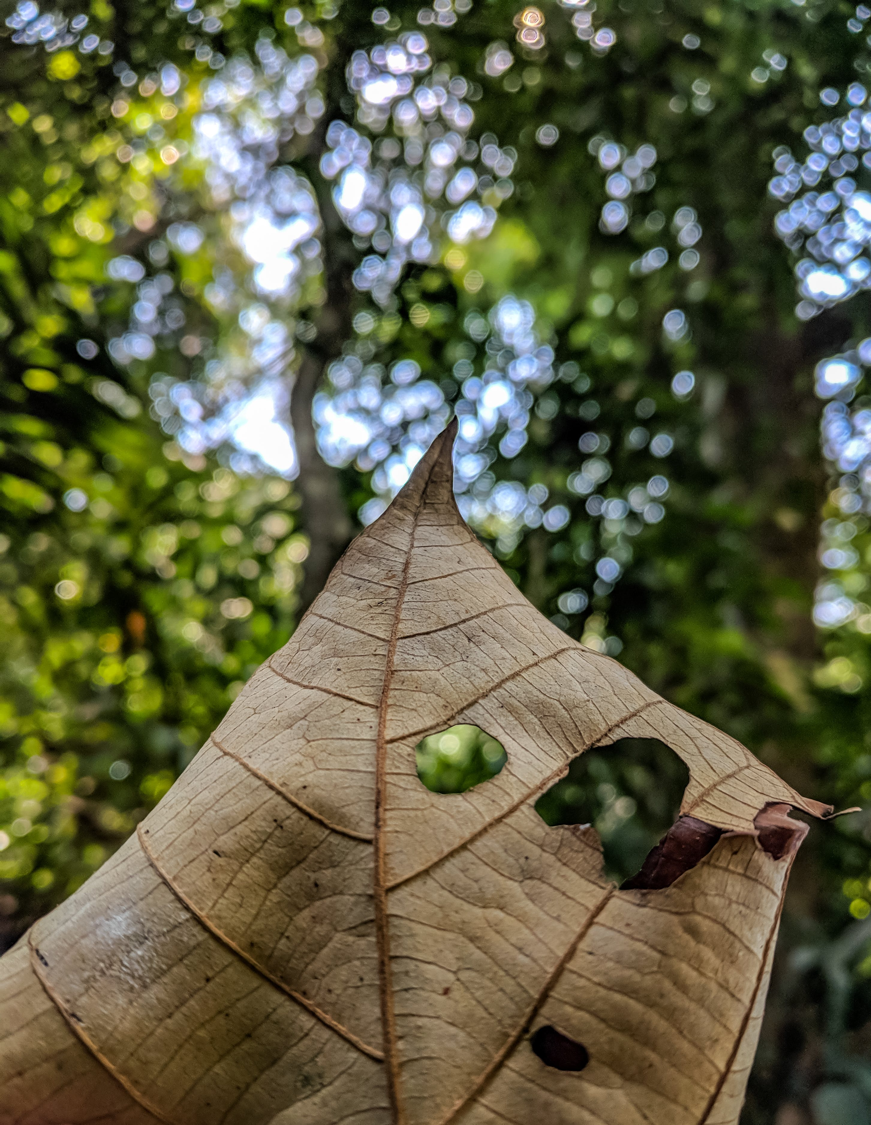 Selective Focus Photography Of Brown Dried Leaf