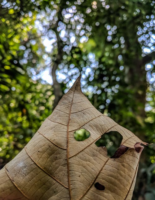 Foto profissional grátis de folha seca, macro