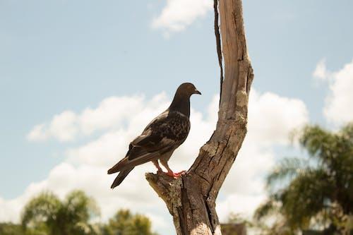 Ảnh lưu trữ miễn phí về cây, chim thiên đường, động vật, Thiên nhiên