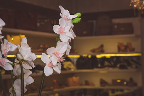 Free stock photo of artificial flowers, events, flower, fotografia